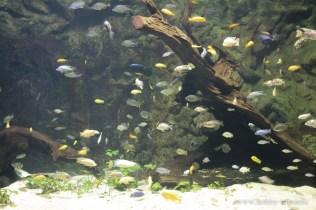 Turkuazoo-akvarium-2