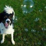 Bubbletastic-Bacon-Bubble-Machine-Bundle-0-0
