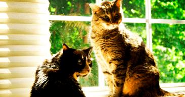 ¿Es importante el microchip en los gatos?