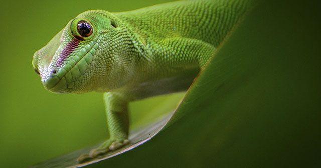 Ventajas y desventajas de tener reptiles como mascota