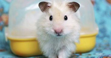 Cómo proteger a nuestro hamster en verano