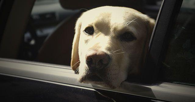 como-evitar-que-el-perro-se-maree-en-el-coche