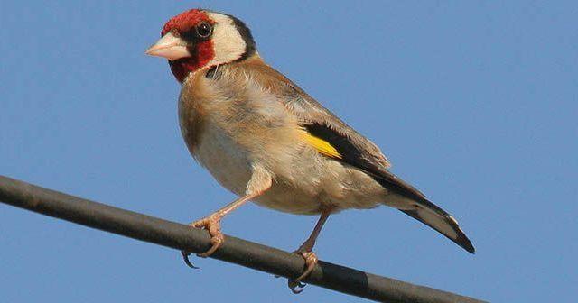 Consejos-para-desparasitar-a-nuestras-aves