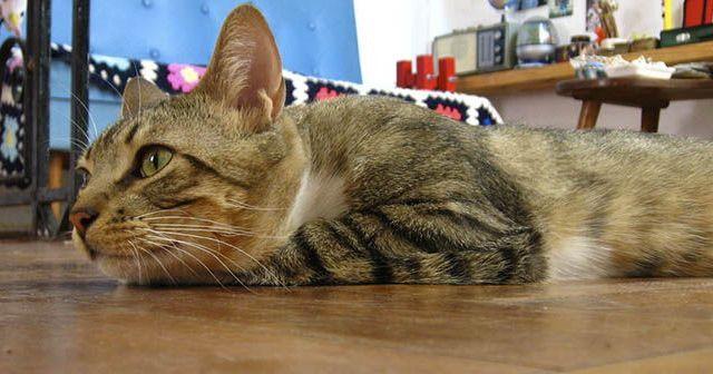 Consejos-para-que-tu-gato-esté-seguro-en-casaConsejos-para-que-tu-gato-esté-seguro-en-casa