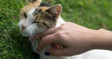 ¿Dónde y cómo debo acariciar a un gato?