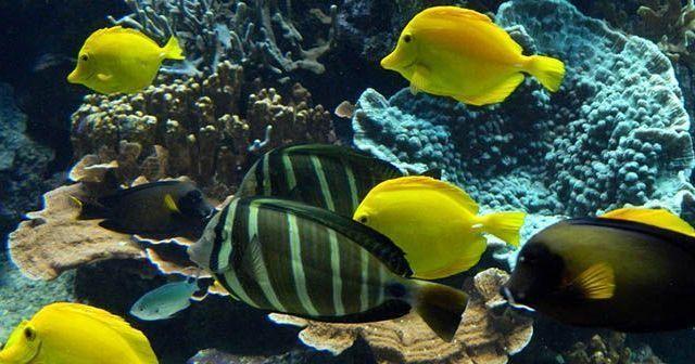 los-peces-y-sus-bebeficios-para-la-relajación