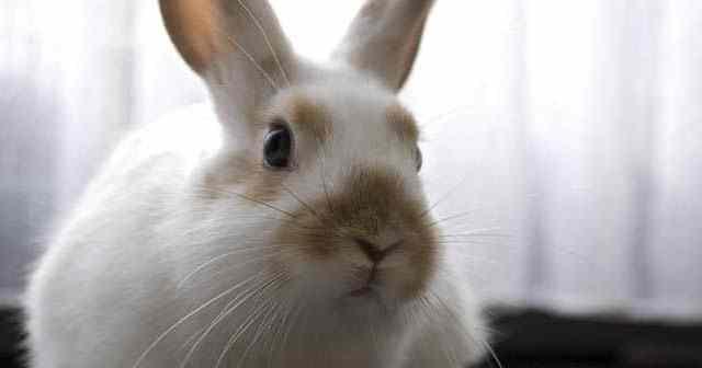 cómo-debo-cuidar-a-un-conejo-en-casa-hobby-mascotas