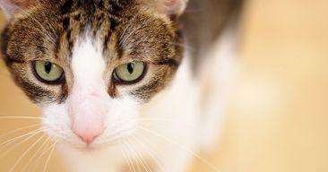 11 cosas que sólo entenderán las personas que tengan gatos