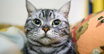 7 cosas que odian los gatos