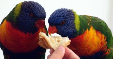 10 alimentos comunes que pueden envenenar a tu pájaro