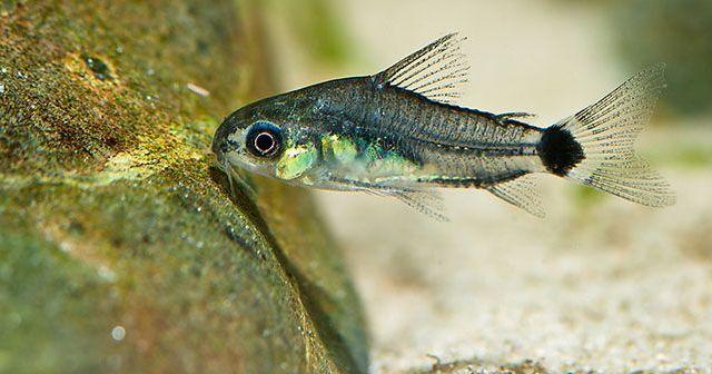 cambios-de-agua-en-el-acuario-para-mantener-a-los-peces-sanos-hobby-mascotas