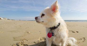 Las vacaciones con mascotas más seguras