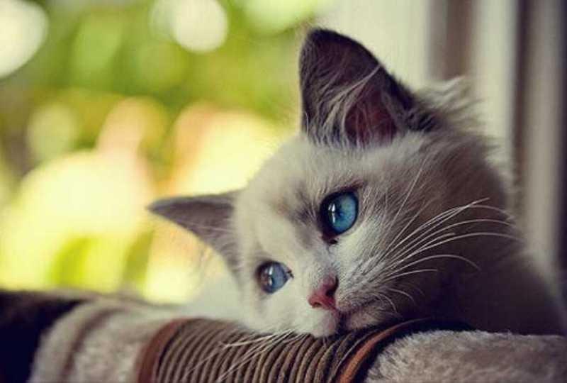 صور جميلة للقطط اجمل واحدث صور للقطط حبيبي