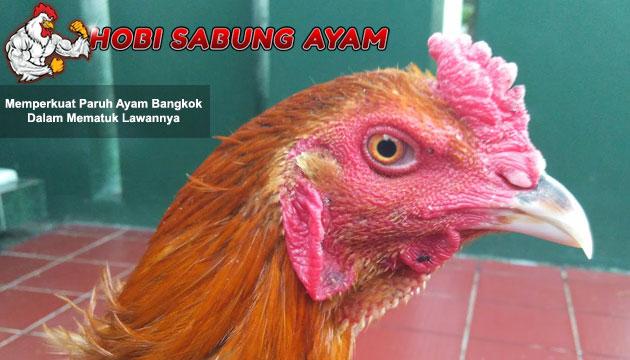 memperkuat paruh ayam - sabung ayam online