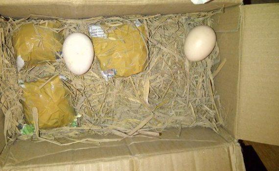 Mitos Ayam Cemani