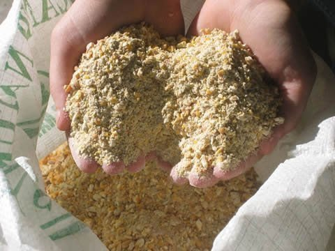 Cara Membuat Pakan Ayam yang Terbuat dari Bahan Alami untuk Menjaga Kesehatan Ayam dan Menekan Biaya Pakan Ternak