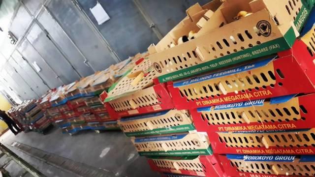 Box yang berisi DOC Joper siap di kirim ke seluruh wilayah Indonesia