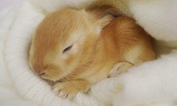 10 Cara Mengenali Ciri-Ciri Kelinci yang Sedang Sakit