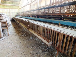 Pembuatan Kandang Ayam Kampung Super Secara Intensif
