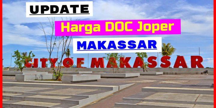 Harga Jual DOC atau Bibit Ayam Kampung Super (JOPER) untuk Daerah Makassar