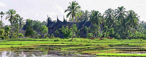 Harga Jual DOC atau Bibit Ayam Kampung Super (JOPER) untuk Daerah Payakumbuh Sumatera Barat