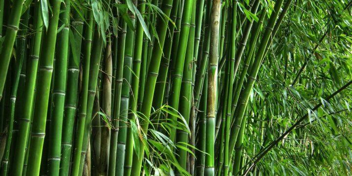 Cara Membuat Kandang Bebek dari Bambu dengan Biaya Murah Namun Berkualitas!