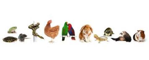 Ayam Dong Tao