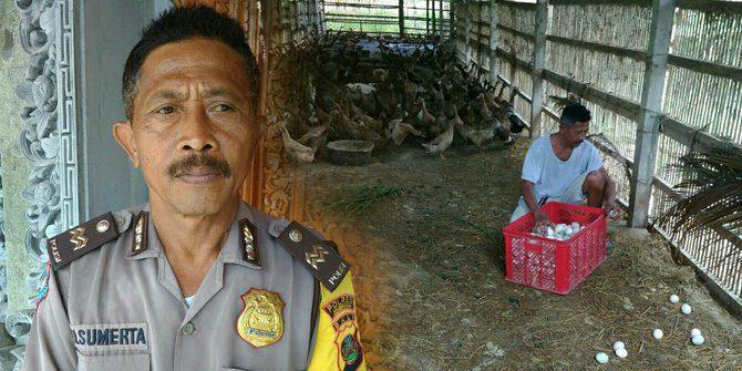 Kisah Sukses Aiptu Made Sumerta dalam Ternak Bebek Petelur Menjelang Pensiun