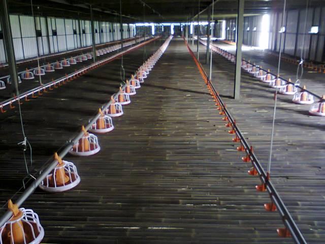 Salah satu bentuk lantai kandang Panggung untuk pemeliharaan Ayam Kampung Super