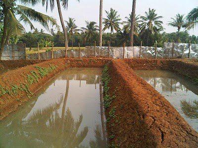 Contoh bentuk kolam pada cara bubidaya ikan lele di kolam tanah