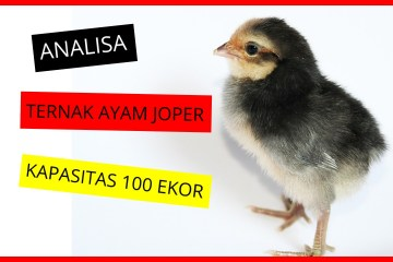 Analisa Ternak Joper 100 ekor