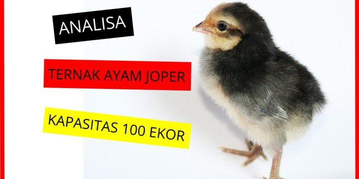 Cara Mudah Ternak Ayam Joper-BONUS Analisa  Ternak Populasi 100 Ekor