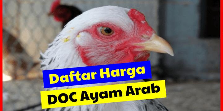 Daftar Harga Jual Terbaru DOC atau Bibit Ayam Arab Petelur  di 2020