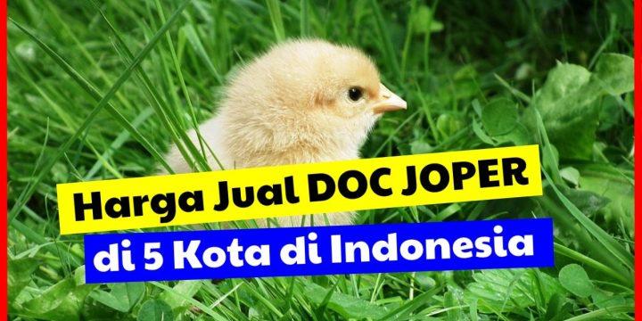 Harga Jual DOC Ayam Joper untuk Surakarta, Surabaya, Semarang, Bandung dan Jakarta