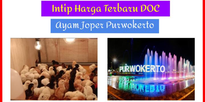 Intip Yuk Harga DOC Ayam Joper Purwokerto dan Sekitarnya