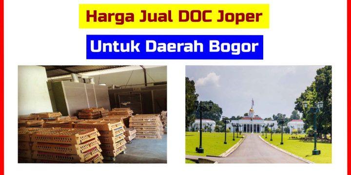 Harga Jual DOC Ayam Joper Wilayah Bogor dan Sekitarnya