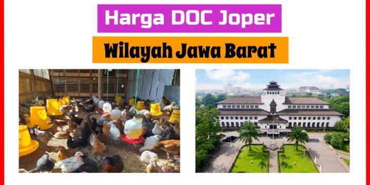 Jual DOC Ayam Joper Jawa Barat Berapa Harganya?