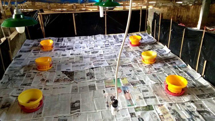 Penggunaan lantai kandang brooder dengan lapisan kertas koran. | Image 5