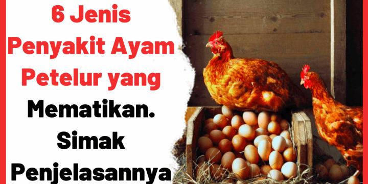 6 Jenis Penyakit Ayam Petelur yang Mematikan. Simak Penjelasannya