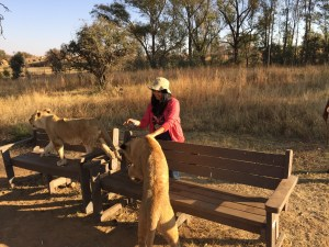 walk-with-lions-south-africa