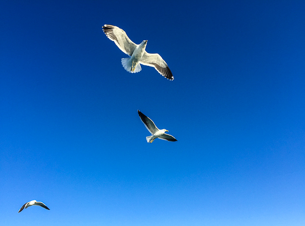 Image of three albatrosses in the sky with their wings open during shark cage diving in south africa Gansbaai Hermanus