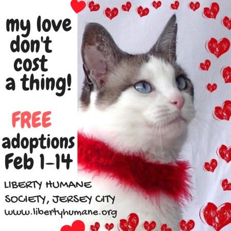 hoboken-girl-free-adoptions-lhs