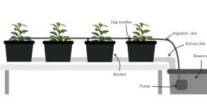 hydroponics, hydroponic, hydroponic gardening