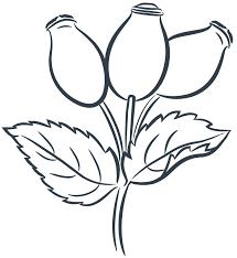 Puhtad ürdid & taimed