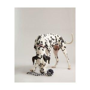 Vastupidav mänguasi koerale