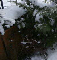 Hochbeet im Winter Schnee bedeckt