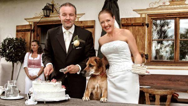 Hochzeitsfoto mit Hund und Hochzeitstorte