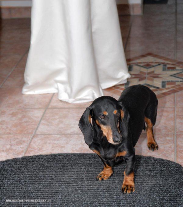 Hund und die Braut