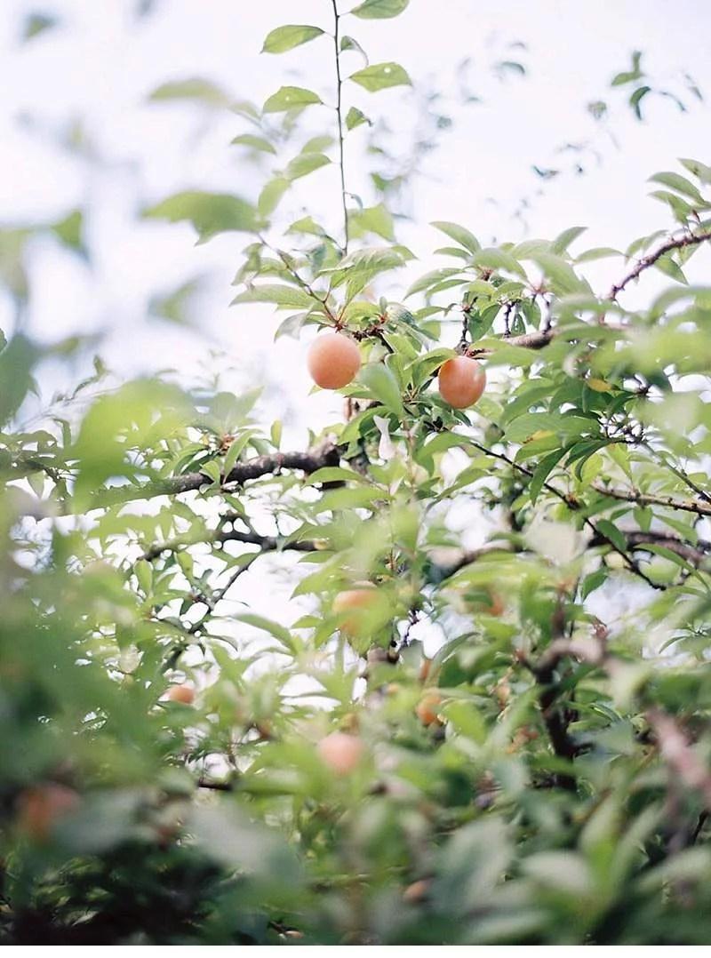 european-garden-wedding-inspirations-porto_0015