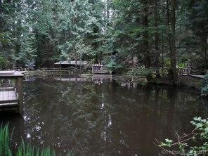 Partout où serpentent les ponts de bois, suspendus ou non dans les airs, la nature nous entoure.